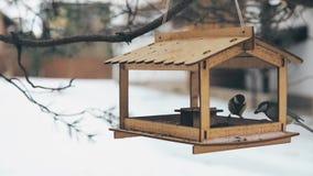 Птицы летели к фидеру для семян подсолнуха сток-видео