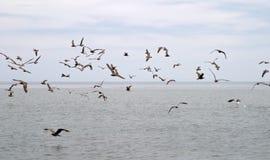 птицы морские стоковое изображение rf