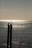 Птицы моря на силуэте столбов Стоковые Изображения