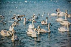 Птицы моря Стоковое Изображение RF
