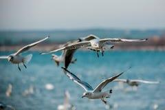 Птицы моря Стоковые Изображения RF
