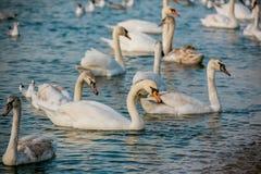 Птицы моря Стоковая Фотография RF