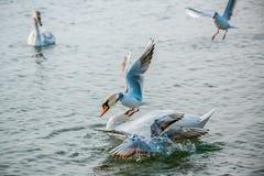 Птицы моря Стоковое Фото