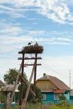 Птицы младенца белого аиста в гнезде Стоковые Фотографии RF