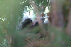 Птицы младенца в фото весны гнезда Стоковое Изображение RF