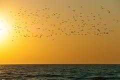 Птицы над водой Стоковые Фотографии RF