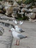 птицы нападения голодные Стоковые Изображения