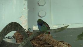 птицы нападения голодные сток-видео
