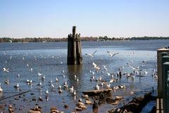Птицы наслаждаясь днем S607 Стоковые Фотографии RF