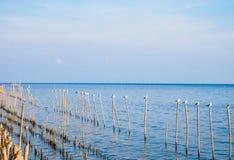 Птицы на бамбуке в море Стоковая Фотография RF