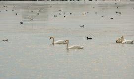Птицы на Большом озере в Pomorie, Болгарии Стоковые Фотографии RF