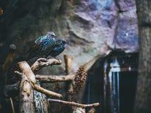 Птицы на ветви усаживания дерева Стоковые Изображения RF