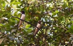 Птицы на ветви Стоковые Фото