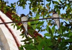 Птицы на ветви Стоковое Изображение
