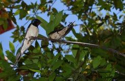 Птицы на ветви Стоковая Фотография