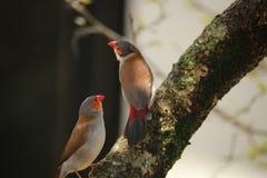 Птицы на ветви стоковые изображения rf