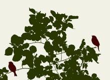 Птицы на ветвях дерева в лете Стоковое Изображение