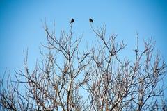 Птицы на ветвях деревьев против неба Стоковые Фото
