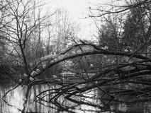 Птицы на ветвях дерева Стоковое Изображение