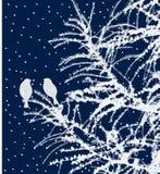Птицы на ветвях ели в декабре Стоковая Фотография