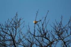 Птицы на ветвях Стоковая Фотография RF