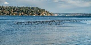 Птицы на воде Стоковое Изображение
