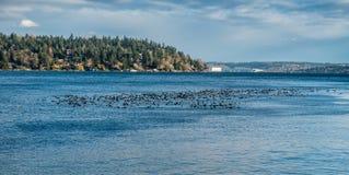 Птицы на воде 2 Стоковое Изображение RF