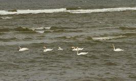 Птицы на воде Стоковое Фото