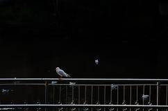 Птицы на воде Стоковая Фотография