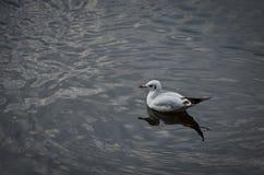Птицы на воде Стоковая Фотография RF