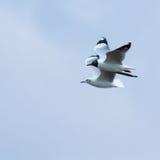 2 птицы на голубом небе Стоковое Изображение