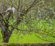 Птицы на дереве Стоковое Фото