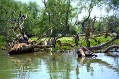 Птицы на деревьях озера Стоковая Фотография