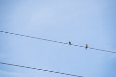 2 птицы на держателе провода Стоковое Фото