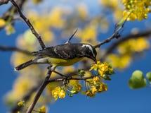 Птицы на желтом цветении Стоковое Изображение