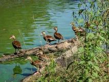 Птицы на журнале Стоковое Изображение RF