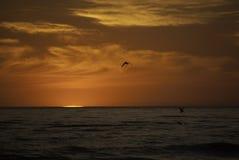 Птицы на заходе солнца Стоковые Фотографии RF
