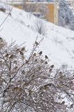 Птицы на зиме Стоковые Изображения