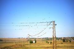 Птицы на линиях электропередач Стоковая Фотография RF