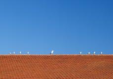 Птицы на крыть черепицей черепицей крыше Стоковые Изображения RF