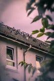 Птицы на крыше старого дома с влиянием нерезкости Стоковые Фотографии RF