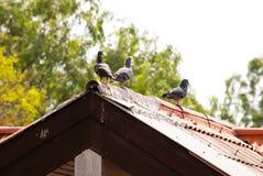 3 птицы на крыше Стоковые Изображения RF