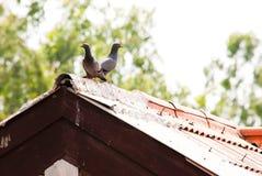 2 птицы на крыше Стоковые Фотографии RF