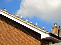 Птицы на крыше Стоковая Фотография RF