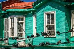 Птицы на линиях электропередач Стоковое Изображение