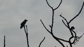 Птицы на мертвом дереве Стоковые Изображения