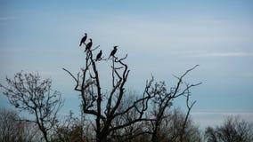 Птицы на мертвом дереве Стоковое Изображение RF