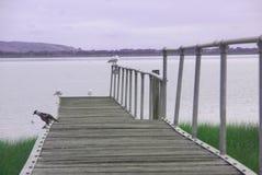 Птицы на моле около Johanna приставают к берегу, Австралия Стоковая Фотография RF