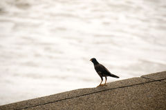 Птицы на море стены воды и воды Стоковое Фото
