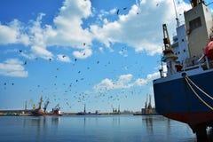 Птицы на небе, море и гавани Стоковые Изображения